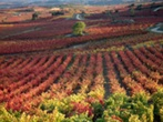 Wine Tours to Spain with Sports Europe